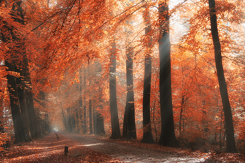 autumn, beautiful, cool, fall, forest, leaves, love, nature, natureza, orange, photography, pretty, season, sunlight, sunny, trees