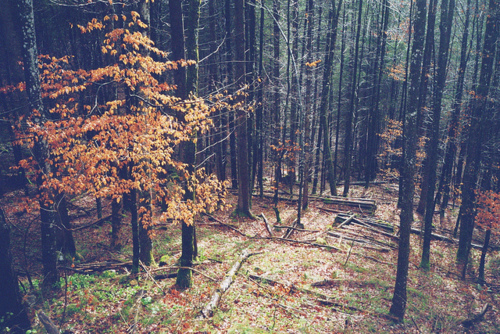 autumn, black, brown, fall, green, nature, orange, photography, trees, vintage