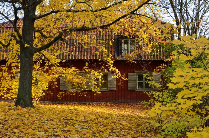 autumn, brown, green, house, leaf