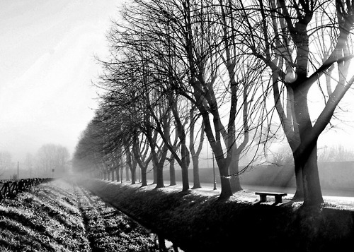 b&w, black & white, black and white, cute, landscape