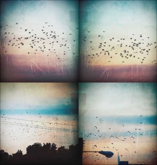 beach, birds, california, cute, lomo, lomography, sky, summer