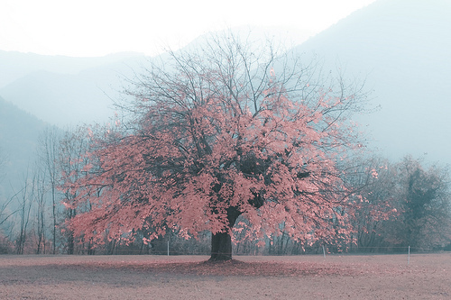 beautiful, cute, love, pink, tree