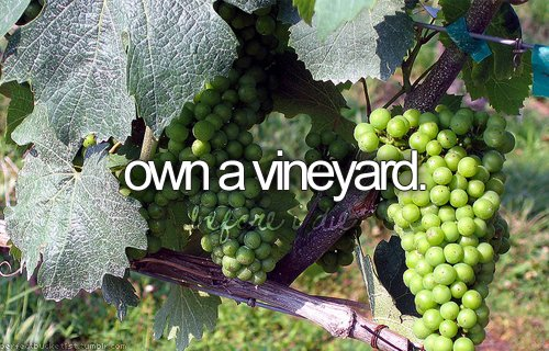 before i die, grape, perfect bucketlist, vineyard, wine