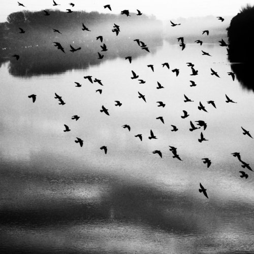 birds, black and white, nature, photography
