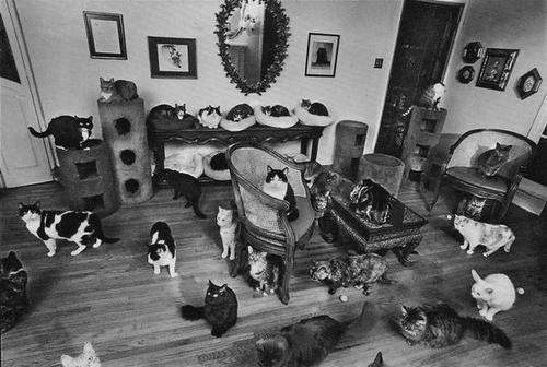 Black And White Cat Cats Room Vintage Image 363846