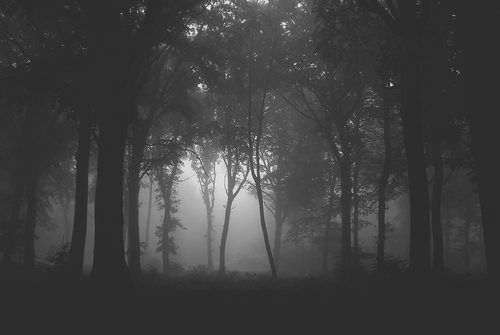 black and white, dark, forest, mist, trees