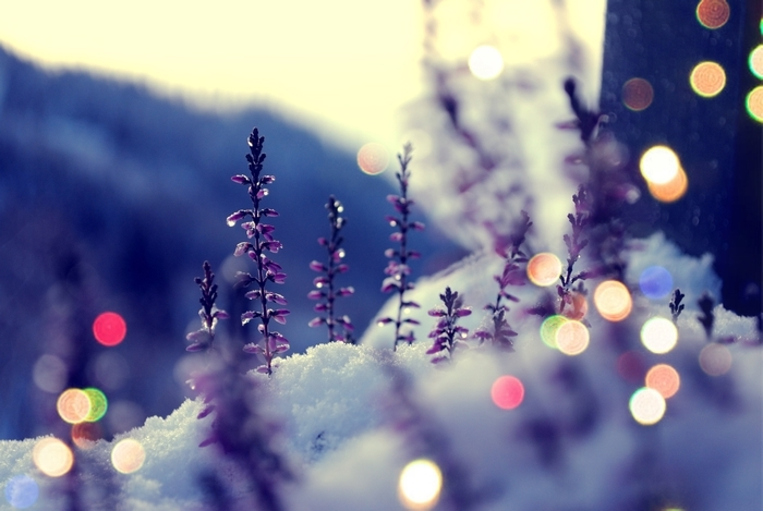 bokeh, snow, winter