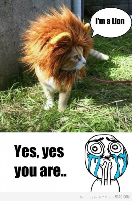 cat, cats, cute, fofo, lion