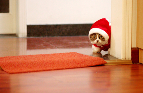 cat, christmas, cute, kitten, new