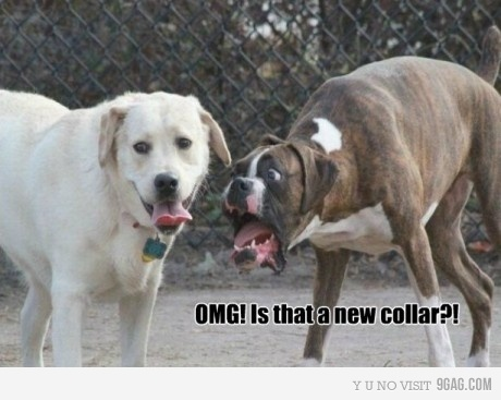 collar, dog, dogs, fuck, funny, haha, humor, lol, omg