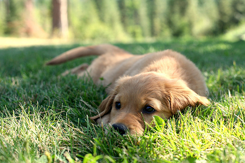 cute, dog, grass, sweet
