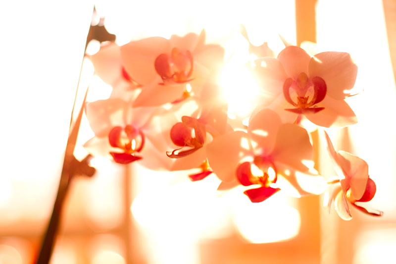 december, flowers, light, love, orchids