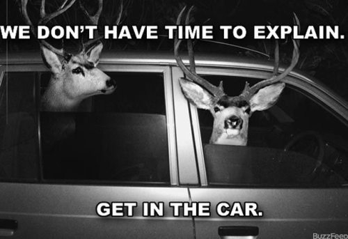 :)), animals, black and white, car, deer, quote