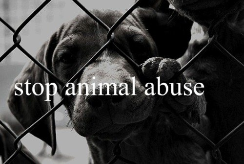abuse, adorable, amazing, animal, animal abuse