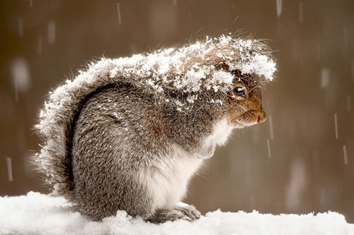 adorable, animal, aww, baby, cold, cute, haha, lol, lol happens, nature, omg, outside, photography, snow, snowing, squirrel, sweet, tail, winter