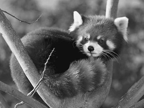 adorable, animal, b&amp;w, baby, beautiful