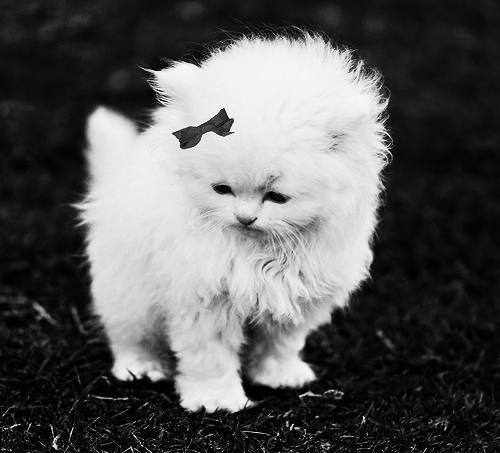 adorable, animal, b&w, baby, black and white