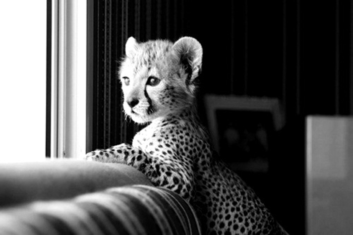 adorable, animal, cute, kid, leopard