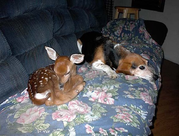 adorable, animals, bambi, beautiful, cloak