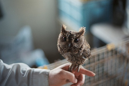 adorable, animals, beak, big eyes, birds