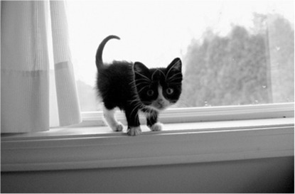adorable, black and white, cats, cute, cuteness