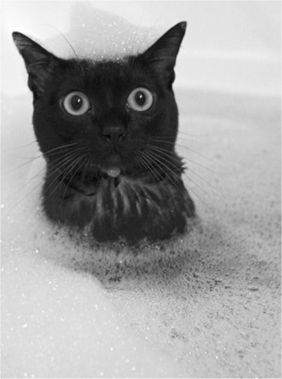 adorable, black and white, cats, cute, cuteness, fluffballs, fluffy, funny, furry, kittens, noir, sweet