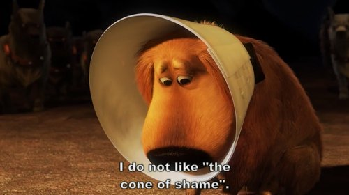 adorable, cone, cone of shame, cute, dug, shame