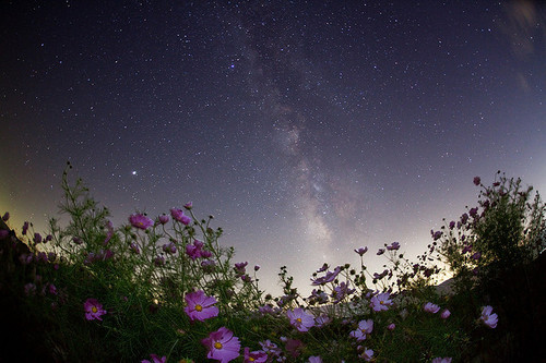 amazing, awesome, bright, cool, darling, flower, flowers, galaxy, happy, light, love you, lovely, night sky, night time, photography, scenery, shine, sky, smile, star, stars, stunning
