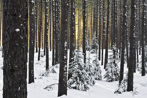 amazing, forest, love, snow, winter, woods
