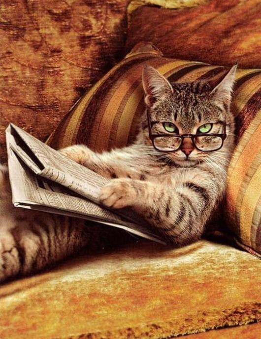 animal, animals, cat, cats, funny, glasses, newspaper, pictures