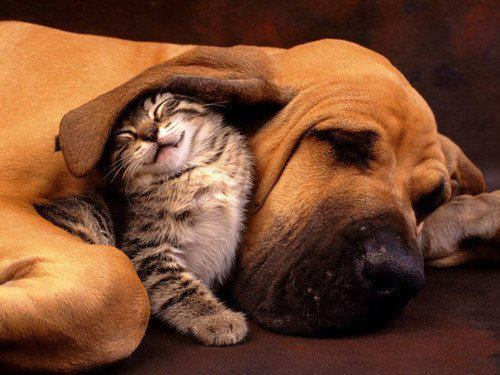 animal, animals, cat, cute, dog, friends, kitty, lovely