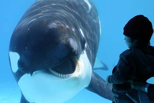 animal, aquarium, beautiful, blue, boy, cute, guy, handsome, kidd, killerwhale, man, orca, photo, photograph, photography, water, whale