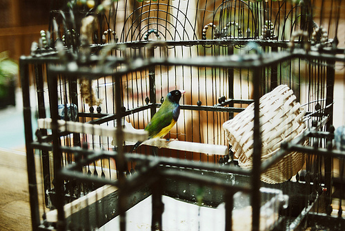animal, art, beautiful, bird, cool, cute, hipster, indie, photo, photography, tiny