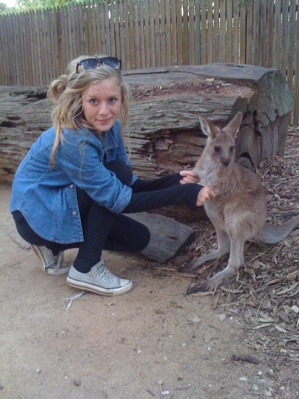 animal, aussi, australia, beautiful, blonde