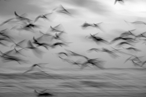 animal, b&w, beach, bird, birds