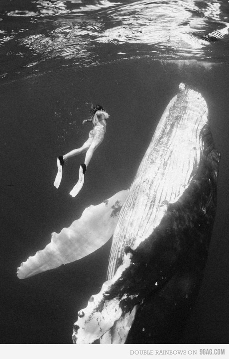 animal, b&w, cool, cute, girl, ocean, sea, sweet, whale