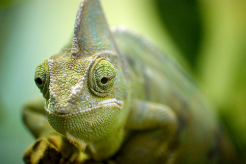 animal, basilisk, beautiful, cute, green