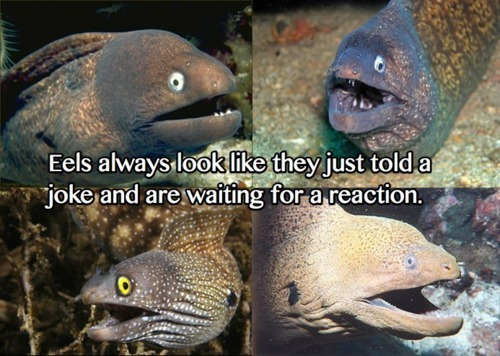i love the fishes. eels in ass jpg 1152x768