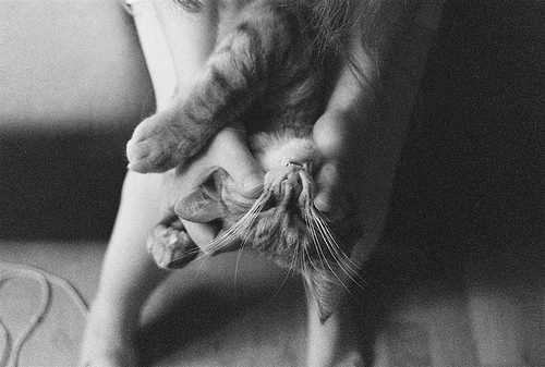 animal, cat, cute, indie, photography