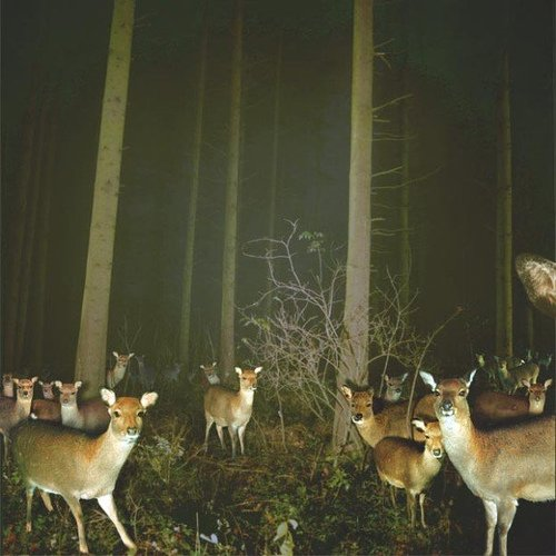 animal, deer, forest, night, trees