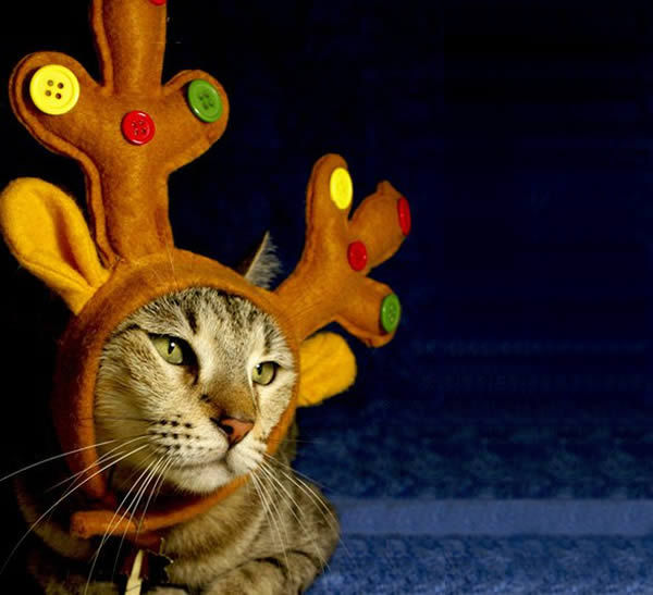 animals, beautiful, cat, cats, christmas, eyes, funny, grey, kitten, nature, pretty, reindeer