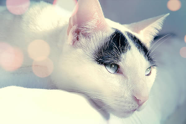 animals, beautiful, cat, cats, eyes, kitten, nature, pretty, white