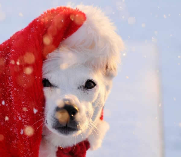 animals, beautiful, celebration, christmas, cute