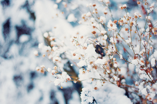 anture, art, awesome, beautiful, cherry, cool, flowers, hipster, indie, nature, photo, photography, summer, white
