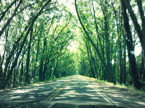 art, beautiful, green, nature, photography, road, trees, trip
