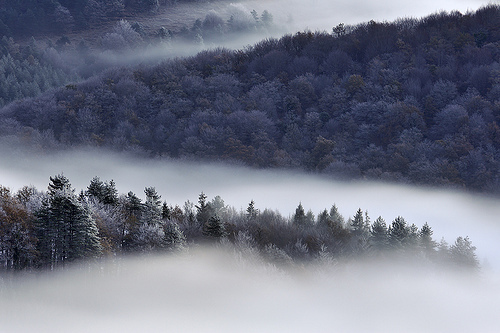 autumn, beautiful, fog, forest, grey