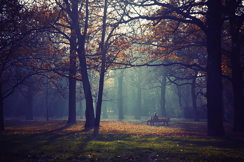 autumn, beautiful, forest, nature, photography, trees, wood