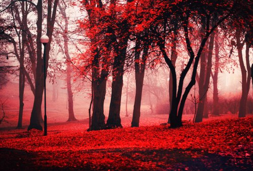 autumn, ember, fire, forest, pretty, red, trees
