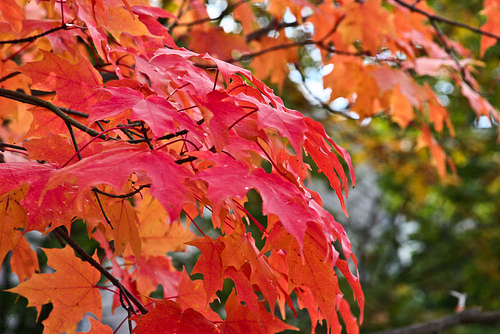 autumn, fall, leaves, photography, red