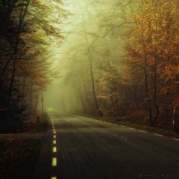 autumn, fog, oer-wout on deviantart, photography, pretty, road